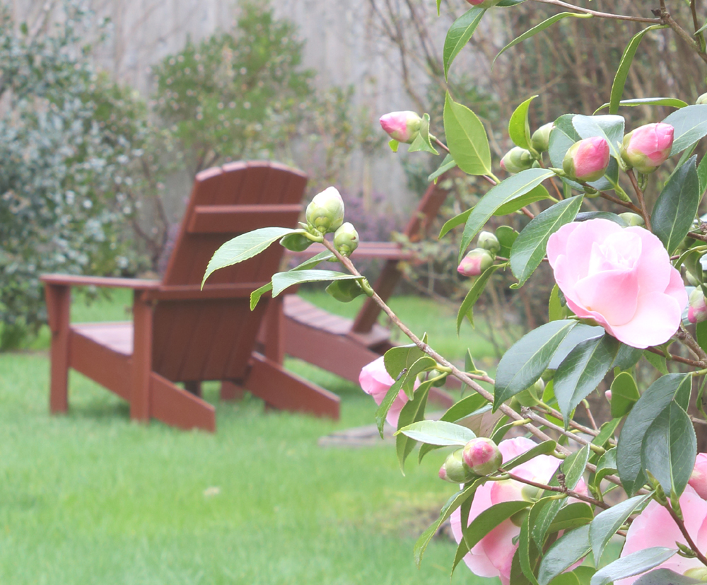 camelias and adirondack chairs